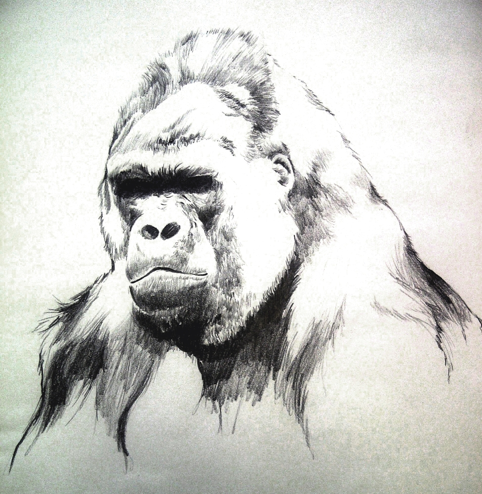 Commission for a Gorilla Drawing (1/2)