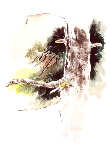 Watercolor Sketch in the Fort Worth Botanical Garden