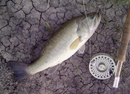 Largemouth Bass Taken Just at Dark