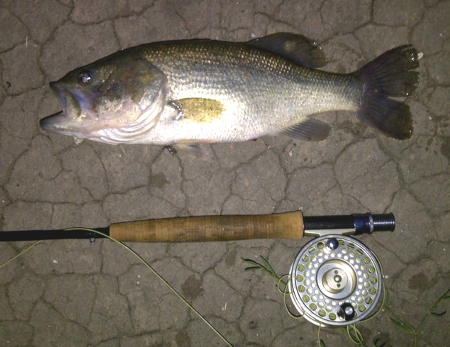 Landed Bass at an Undisclosed Location