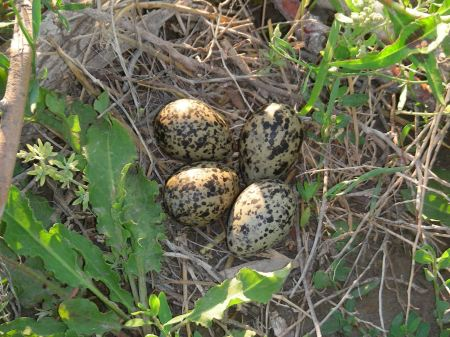 Eggs at the water's edge