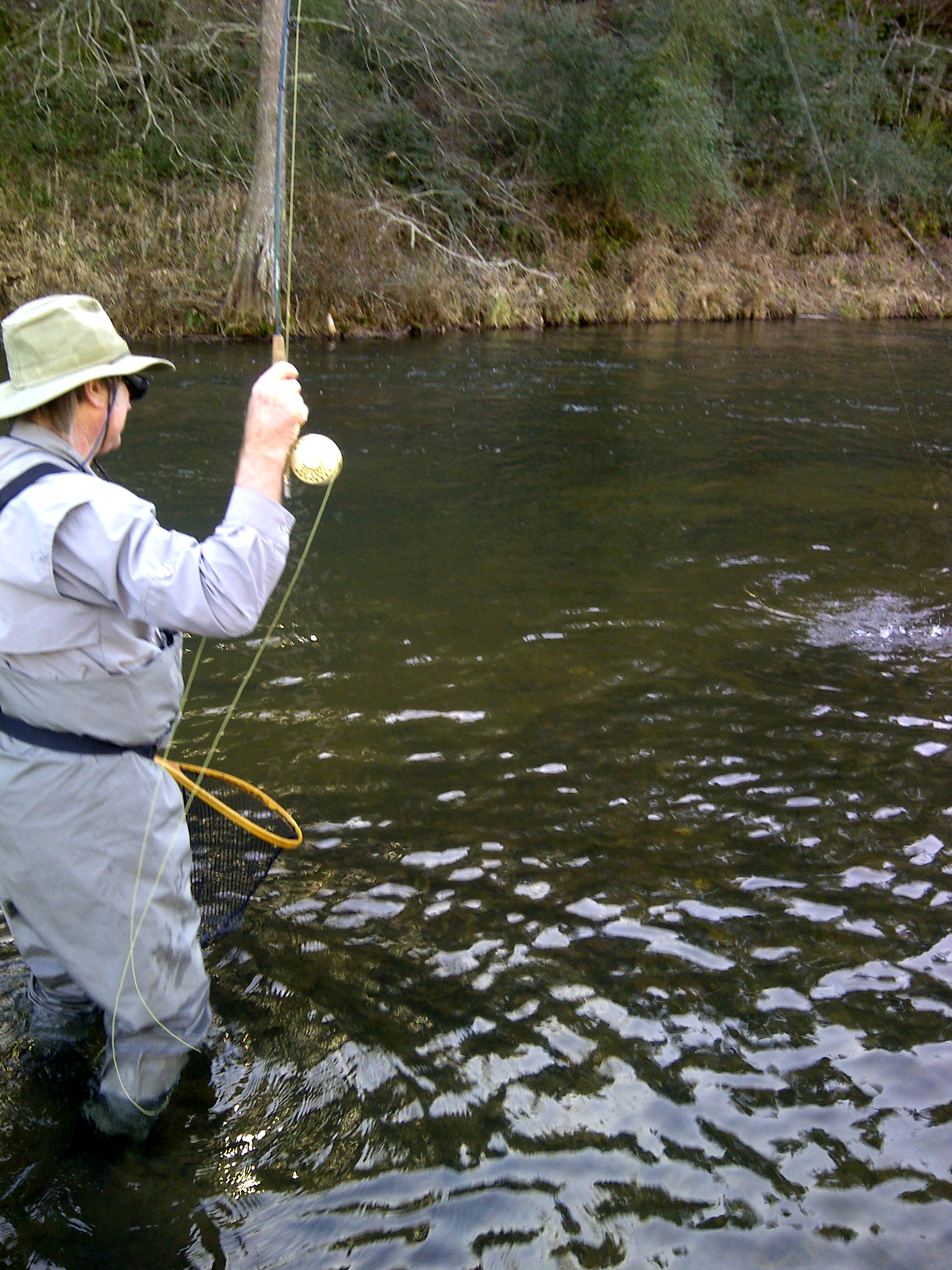 Bringing in a Large Rainbow Trout