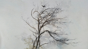 Winter Tree Study in Stovall Park