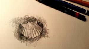 Experimental Sea Shell Sketch