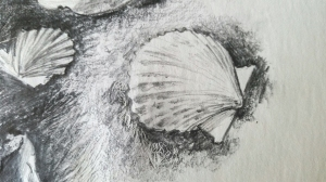 Drawing a Shell on Sunday