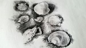 Sunday layered shell drawings