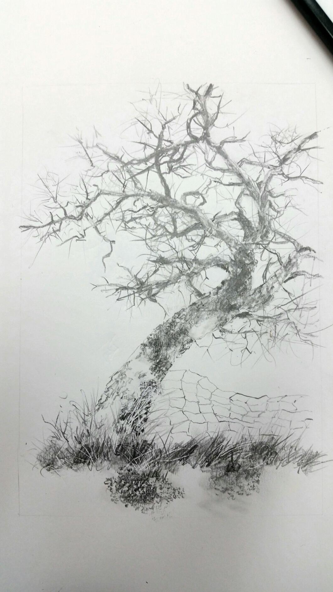 winter tree & fence