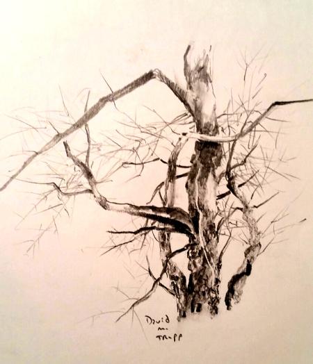 tree january 8