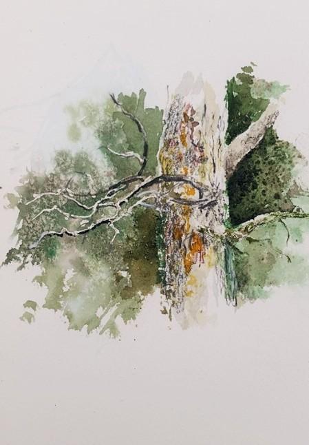 pine (2)