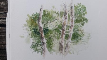 pine lorraine