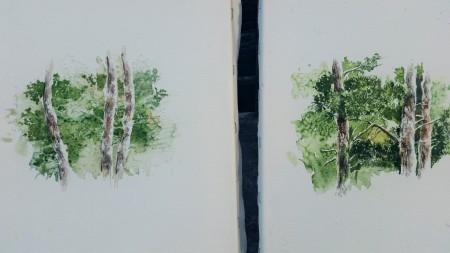 pines (2)