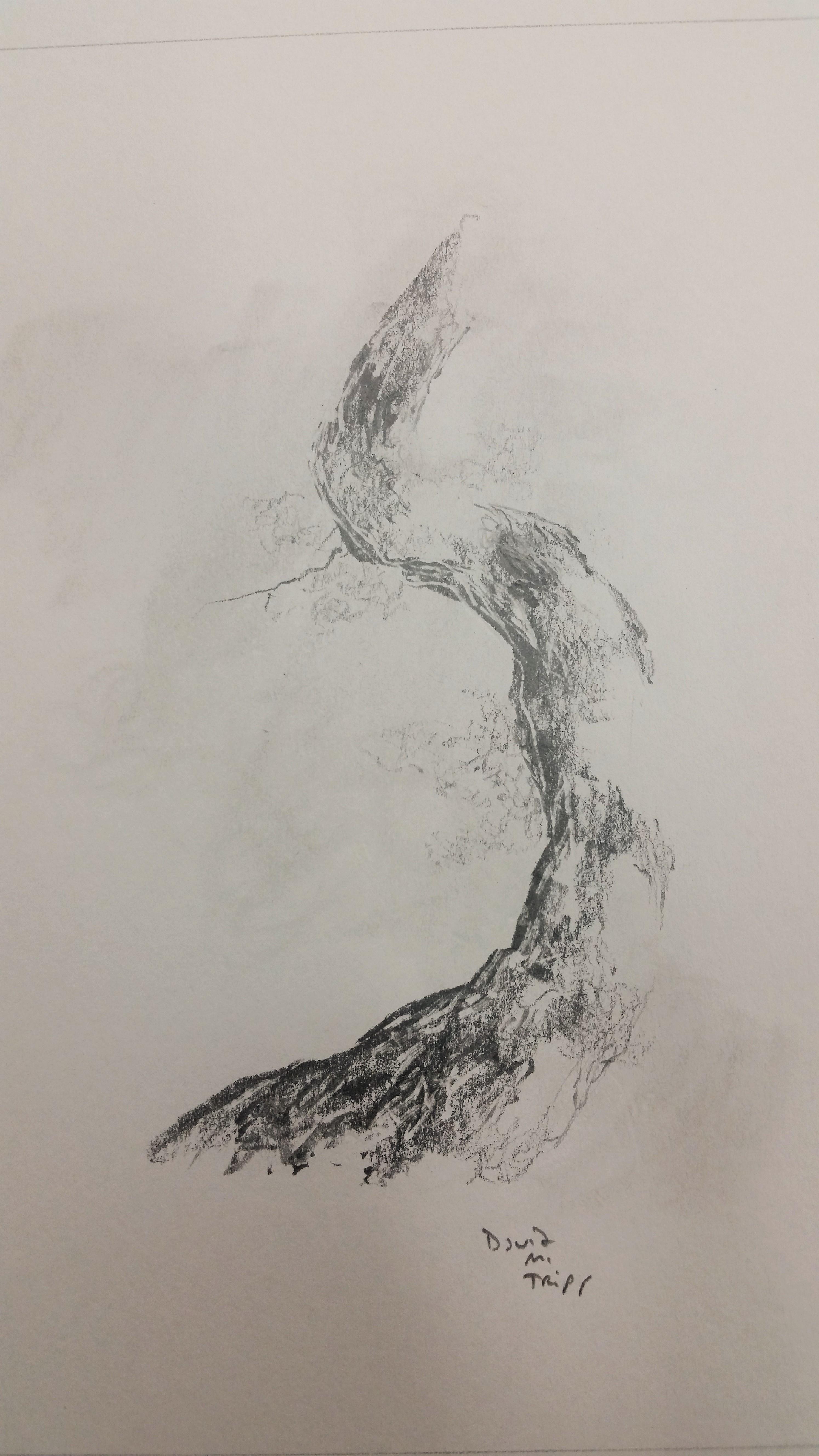 tree-bent