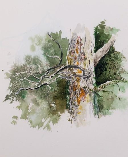 South Fork Pine
