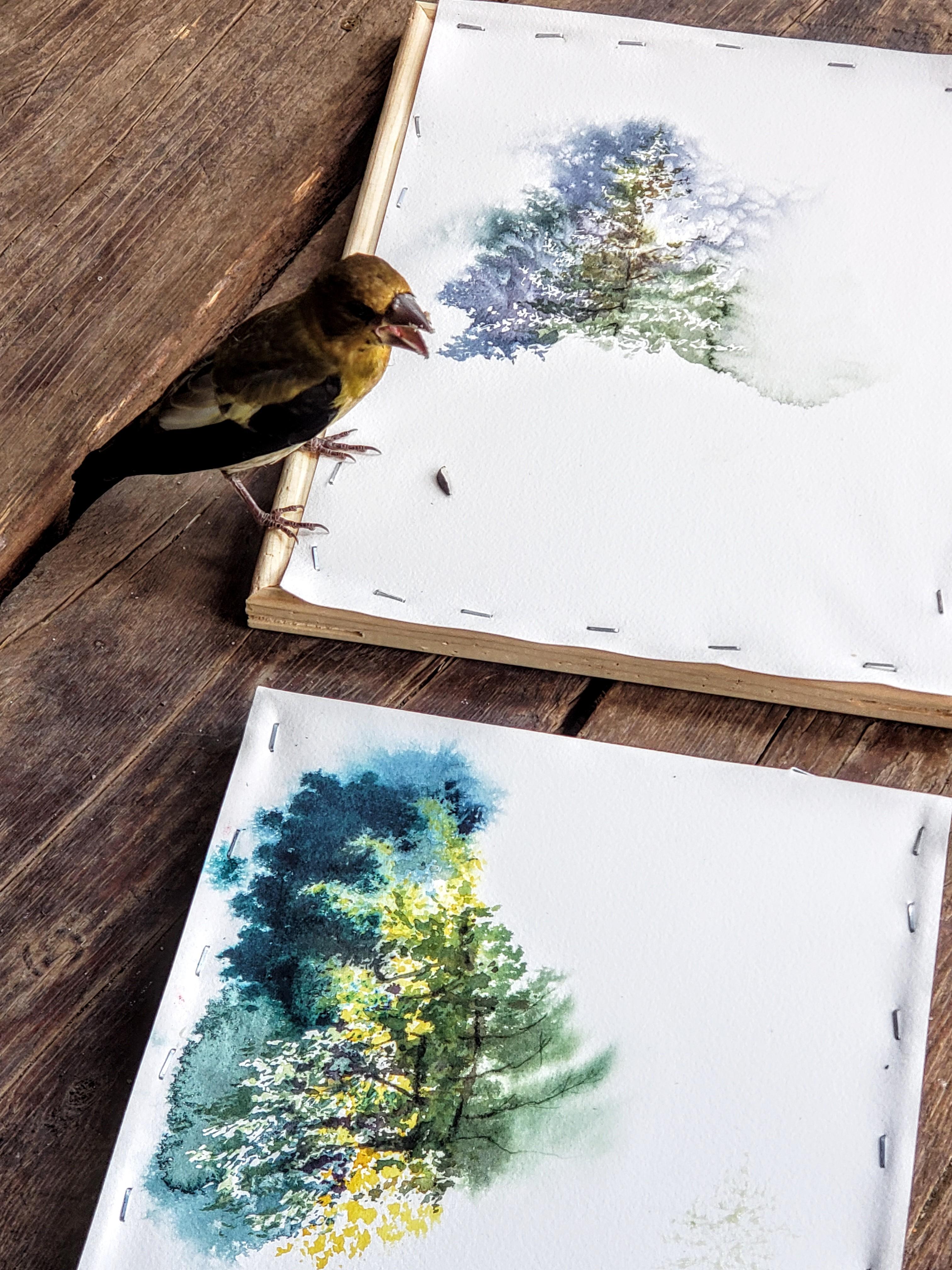 s bird