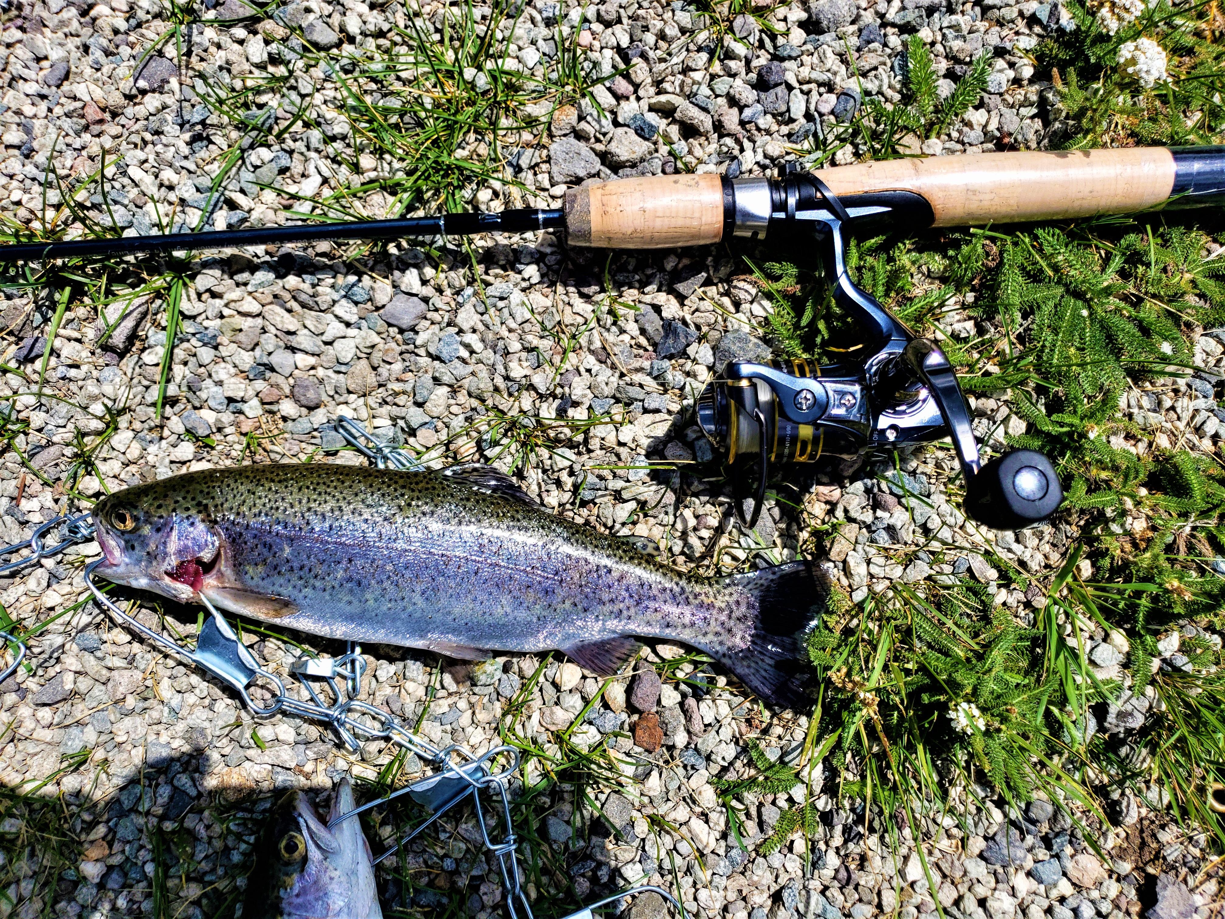 trout bigger